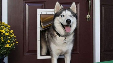 Dog Door Installers in Lamont